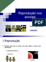 Reproduo Nos Animais
