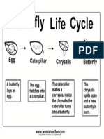 Butterfly Life Cycle3
