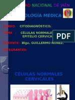 CELULAS NORMALES CERVICALES CITO-DIAGNOSTICO CITOLOGIA
