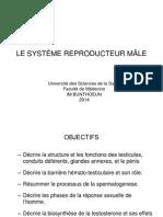 LE SYSTÈME REPRODUCTION MÂLE.pdf