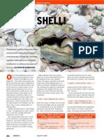 Intro Shell