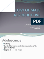 Male Reproductive Physiology[1]