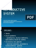 Male Reproductive System[1]
