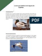 Aves de Cajiititlán