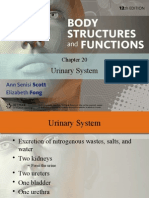 urinary system text book ppt