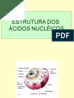 Estrutura Dos Ácidos Nucléicos1