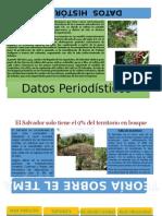 Mural Deforestación