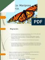 Presentación práctica Mariposa Monarca.