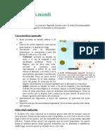 Chilomastix-mesnili