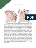 Anatomi dan Fungsional