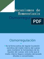 Mecanismos de Homeostasis