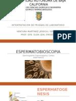 espermatobioscopia