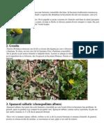 Buruieni-comestibile.pdf
