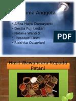 wawancara_petani_X_AK_1.pptx