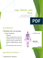 arms, legs, hands, and feet