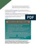 Bacterias caracteristicas