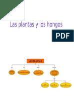 Las Plantas y Los Hongos