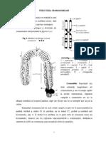 2_cromozom.pdf