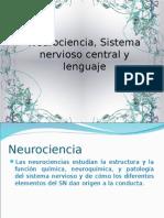Neurociencia, Sistema nervioso central y lenguaje