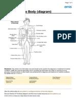 Cardiovascular Diagram