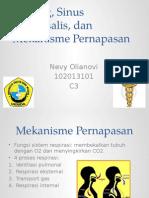 Nevy - PPT PBL Blok 7