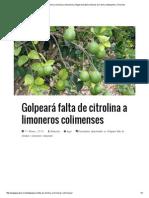 Golpeará Falta de Citrolina a Limoneros Colimenses _ Ángel Guardián _ Noticias de Colima, Manzanillo y Tecomán