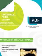 Articulaciones Espalda Humero Radio y Cubito