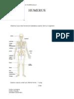 Anatomia Si Fiziologia Humerusului