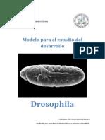 Modelo de desarrollo embrionario