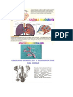 Anatomia y Fisiologia Del Cerdo