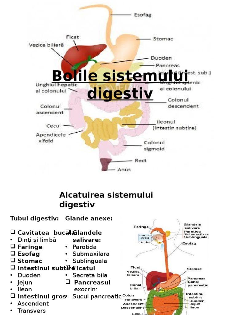 afectiunile sistemului digestiv referat)