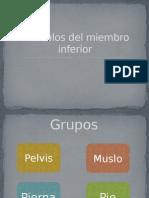 Músculos del miembro inferior.pptx