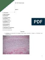 4. Tecido Cartilaginoso e Ósseo.pdf