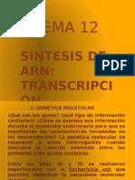 12. Síntesis de ARN. Transcripcion