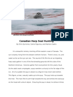 canadian harp seal hunting