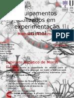 Modelos animais Alzheimer