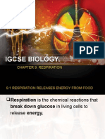 Igcse Biology Chapter 9 Respiration