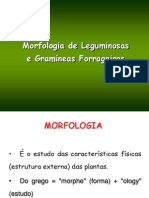 Morfologiapastagens.pdf