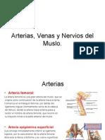 Anatomia (1)