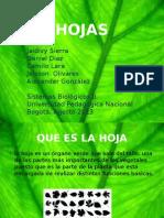 Exposicion Las Hojas