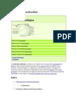 Evolución molecular.docx18-05-2015.docx