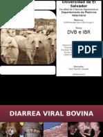 DVB e IBR