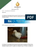 Articulo Coccidiostatos Consideraciones Para Su Uso