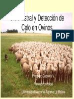 P Cabrera-Ciclo Estral y Detección de Celo en Ovinos.pdf