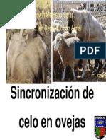 E Mellisho-Sincronizacion de estros.pdf