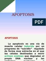 APOPTOSIS[1].ppt