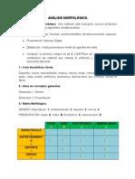 Analisis Morfológico Caso Practico