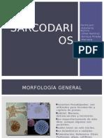 Generalidades de Sarcodarios (Protistas)