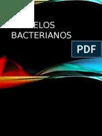 flagelos bacterianos finaal!