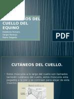 Derroteros Del Cuaello Del Equino Mejoraciones